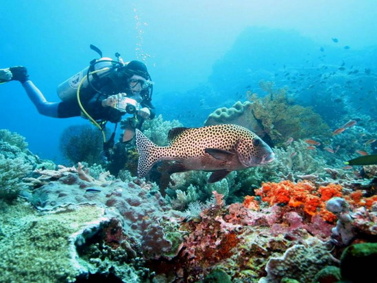 Phu Quoc Island Diving